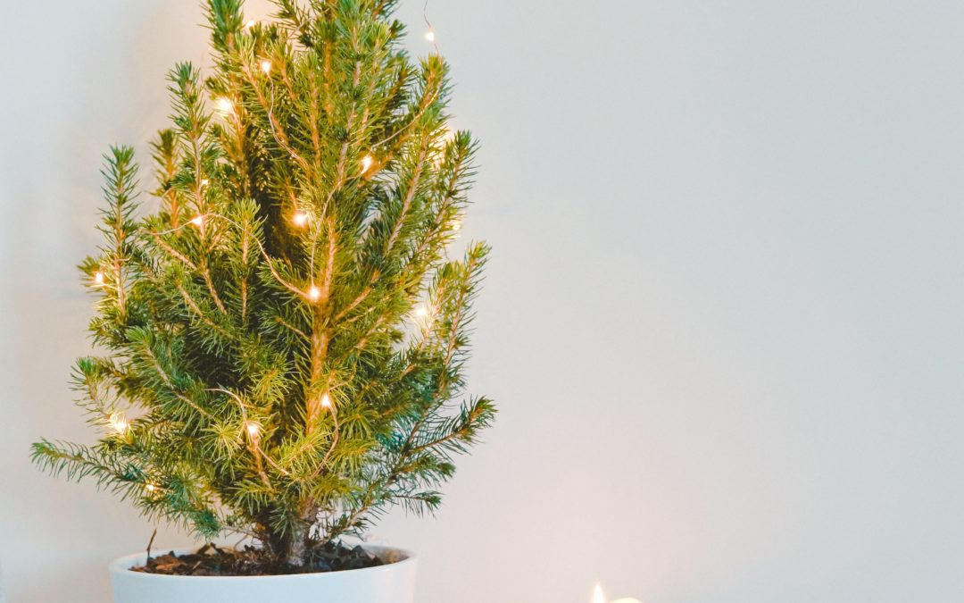 Forever Green Christmas trees